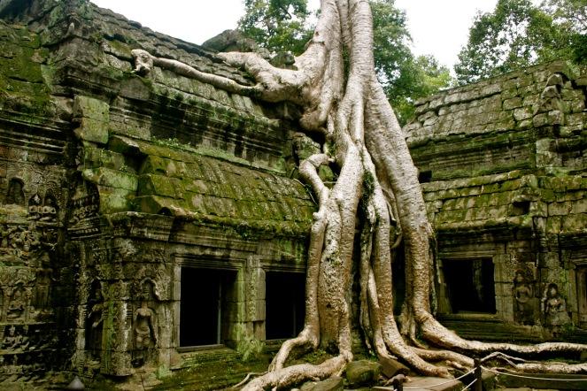 Angkor Wat: Die Natur holt sich alles zurück