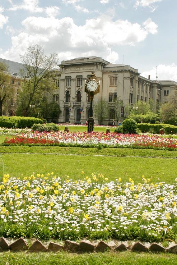 Cismigiu Park: bunte Blumen