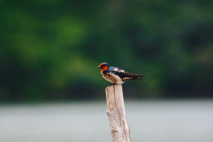 Koh Chang: Nahaufnahme eines kleinen Vogels