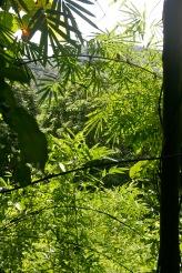 Chiang Mai: Dschungel-Feeling light
