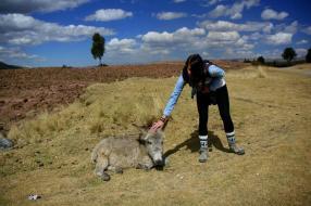 Jasmin mit Esel bei Cusco