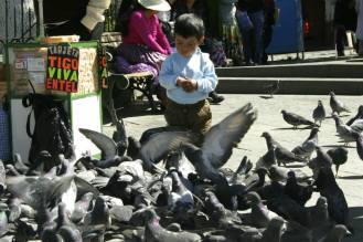 Tauben füttern in La Paz