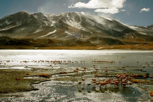 Anden Galore mit unzähligen Flamingos