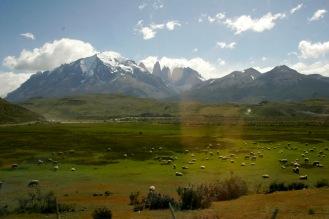 Schafe und Berge im Torres del Paine