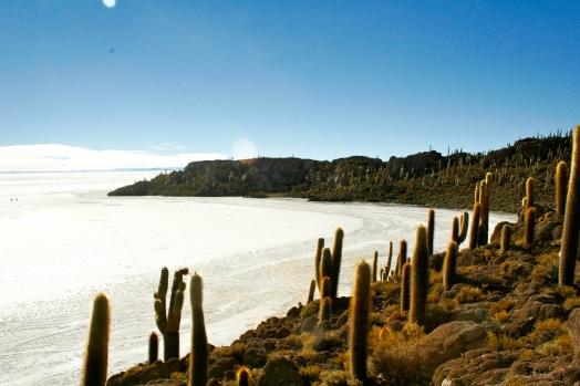 Salar de Uyuni: Kakteenwald