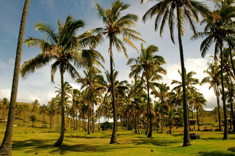 Palmenmeer am Anakenastrand