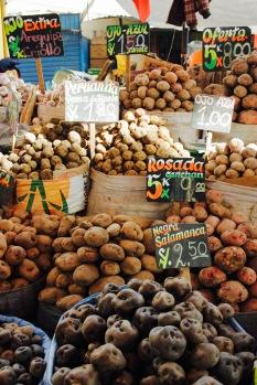 Typisch Peru: unzählige Kartoffelarten