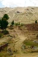 Ruine Saqayhuaman: Wanderung durch die Anden
