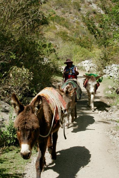 Inka Trail: Packesel