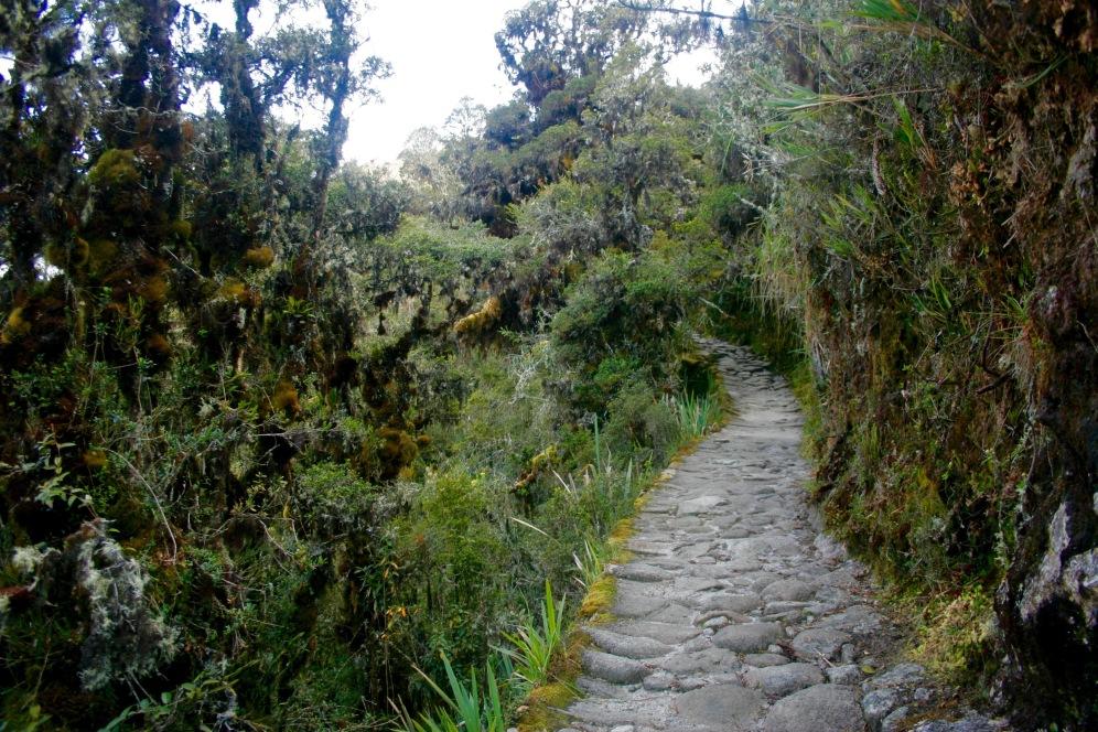 Inka Trail: Weg durch den wolkenbehangenen Wald
