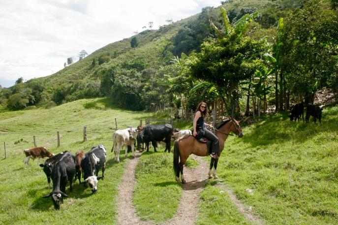 Auf dem Rücken der Pferde...