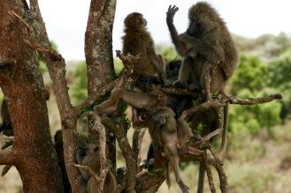 Arusha Nationalpark: Perfekt eingefangen