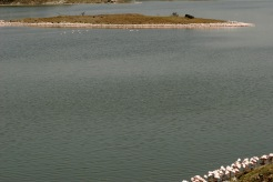 Arusha Nationalpark: Pelikane en masse