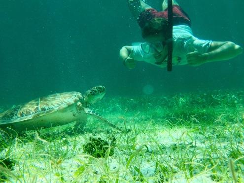 Unterwasserwelt in Belize: Hallo Schildkröte