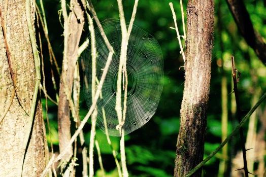 Spinnennetz im Manuel Antonio Nationalpark