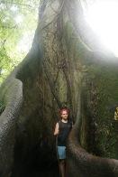 Riesige Bäume im Arenal Nationalpark in Costa Rica
