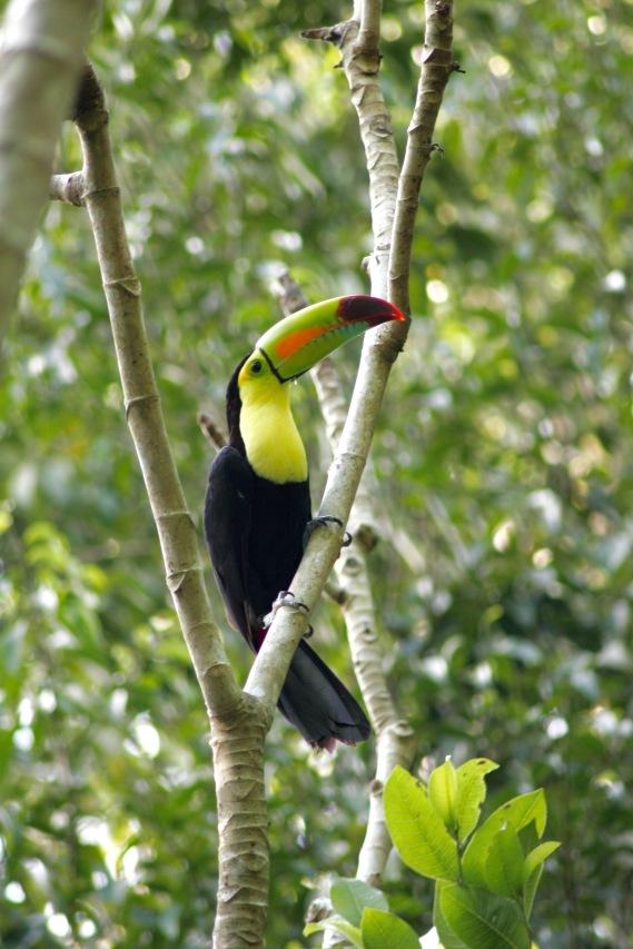 Tikal: Begegnung mit einem wunderschönen Tukan