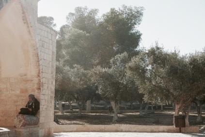 Olivenbäume am Tempelberg