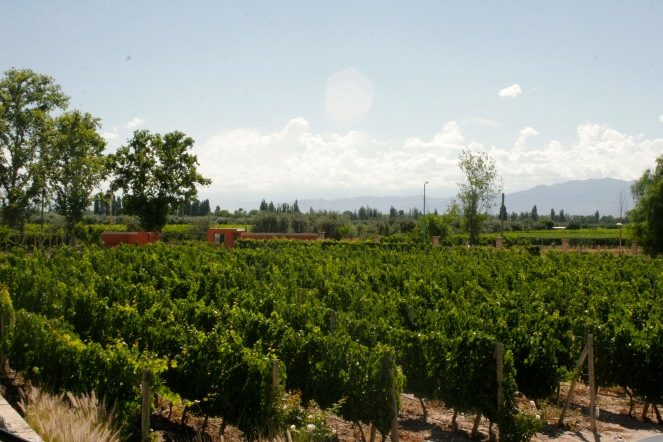 Weingut in Mendoza