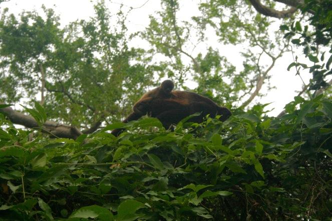Affenbaby im Charco Verde