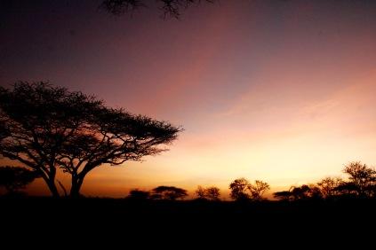 Farbenpracht in der ewigen Weite der Serengeti