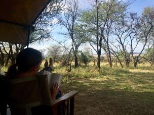 Lesen im Kati Kati in der Serengeti