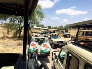 Jeep Ansammlung bei einer Löwenfamilie