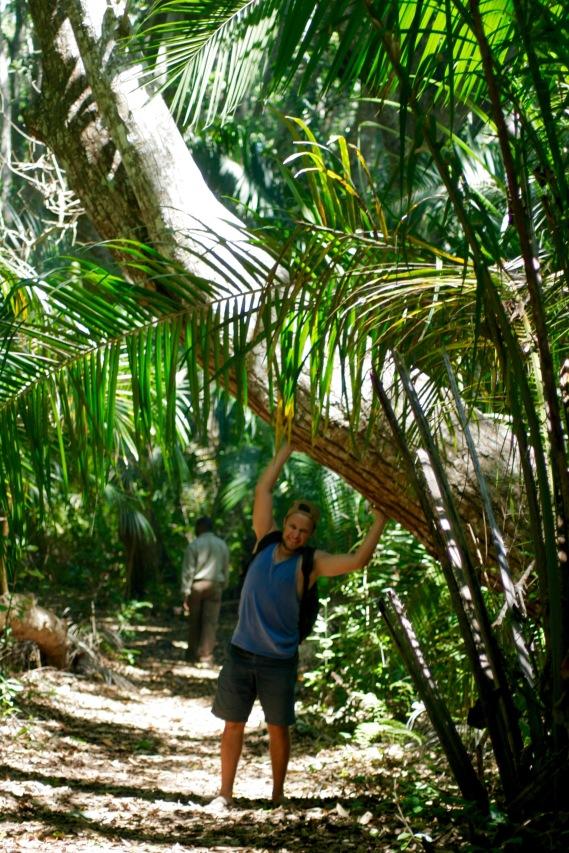 Jozani Forest - Riesige Bäume