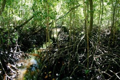 Jozani Forest - Mangrovenwälder