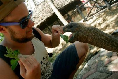 Hungrige Riesenschildkröte auf Prison Island