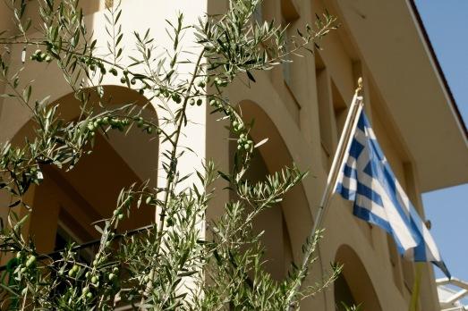 Olivenbäume in Thessaloniki