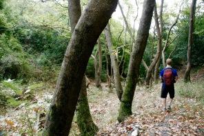 Waldabschnitt im Olympus Nationalpark