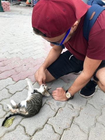 Wir und diese Katzen...