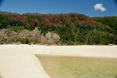 Farbenmeer im Abel Tasman