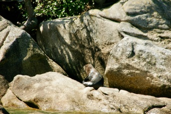 Robbe im Abel Tasman Nationalpark