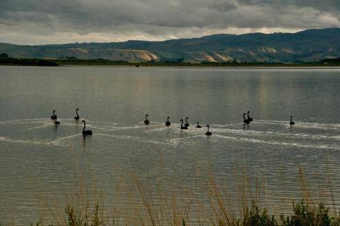 Campen am Wairarapa See