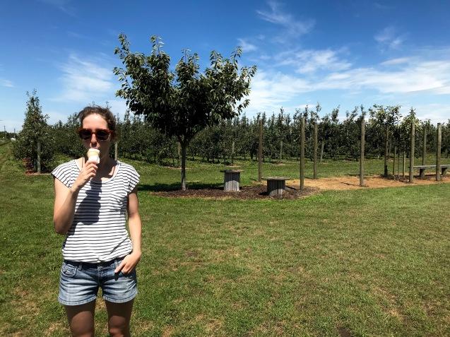 Heidelbeereis in Hawkes Bay