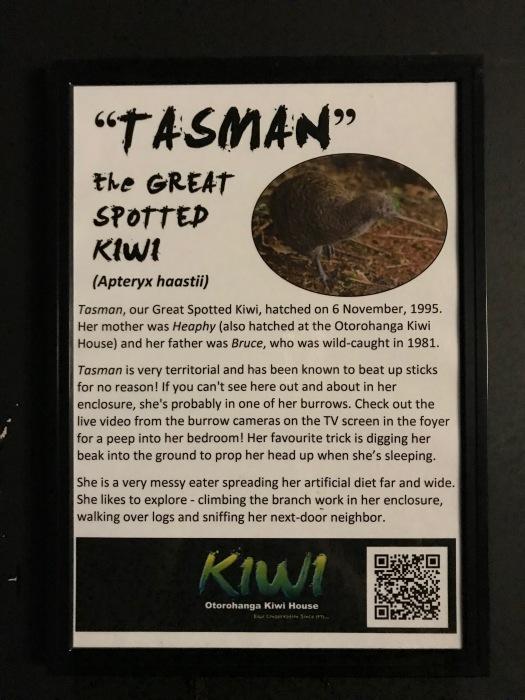 Kiwi-Begegnung - leider zu dunkel zum Fotografieren