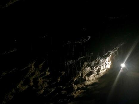 Spuckefäden der Glühwürmchen an den Höhlendecken
