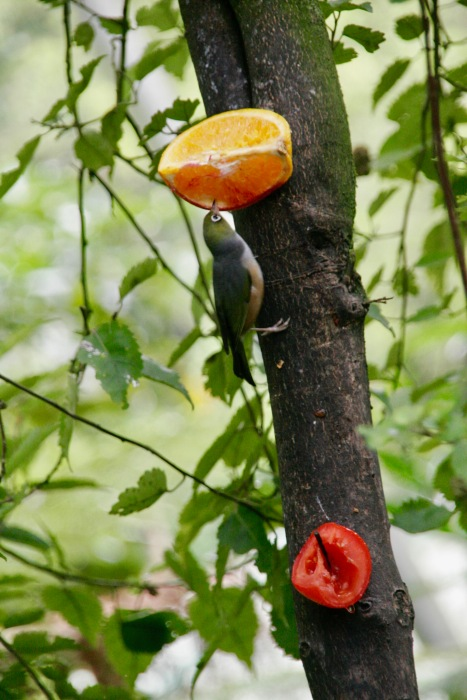 Kleiner Vogel im Kiwi House Otorohanga
