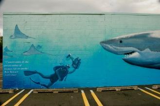 Street Art in Napier 6