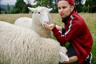 Schafe füttern auf der Smith Farm