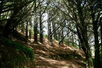 Wanderweg zum Victoria Peak