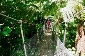 Dschungel im Te Papa Tongarewa Museum