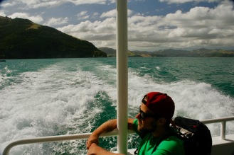Bootstour mit Black Cat in Akaroa