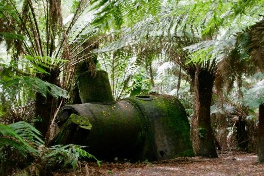 Alte Relikte im Otway Nationalpark