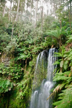 Wasserfall im Otway Nationalpark