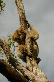 Unser kleiner Lieblingskoala auf Raymond Island