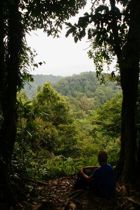 Alex blickt über die riesigen Urwaldbäume