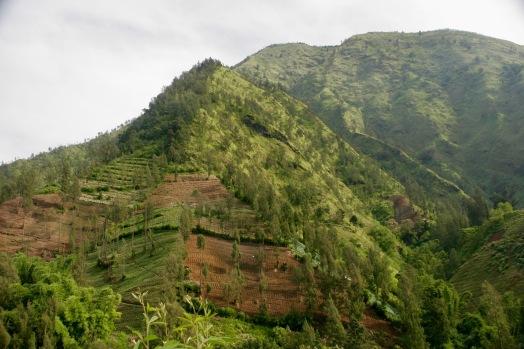 Felder bei Cemoro Lawang